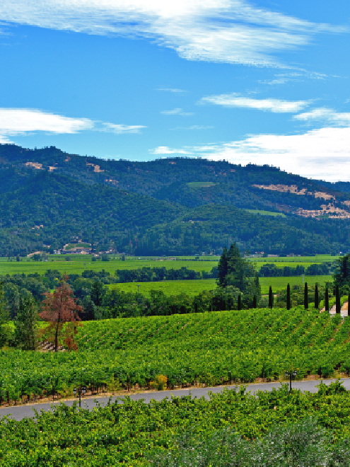 DISCOVER ALL OF THE EXCITING ATTRACTIONS NEAR OUR NAPA HOTEL